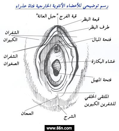 فتحة الكس Video http://www.66n.com/forums/showthread.php?t=18999